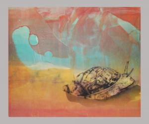 Ovate Amber Snail